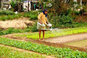 Gardener,-Vietnam.jpg