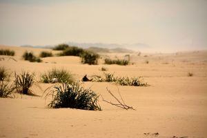 Sand,-dunes.jpg